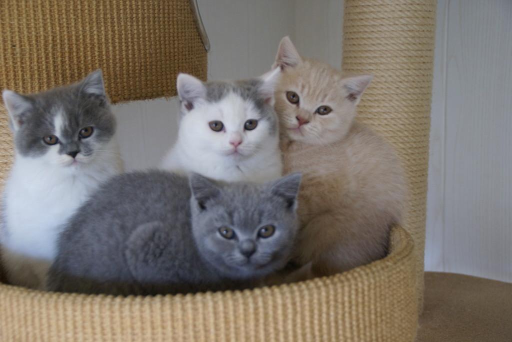 Lizzy, Vinn en Muis zijn bij hun nieuwe mensen gaan wonen!