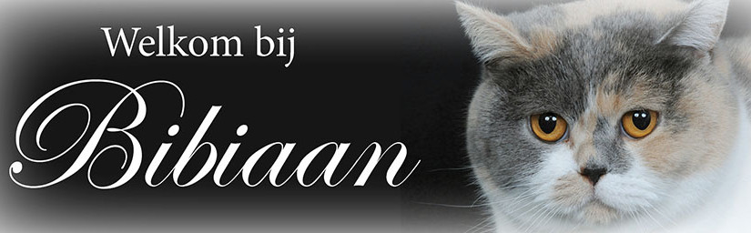 Cattery van Bibiaan